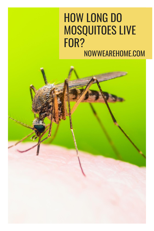 How long do mosquitoes live for? Well actually not that long....#mosquito #mosquitoes