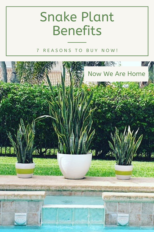 Snake Plant Benefits - 7 Reasons to Buy Now!!#snakeplant #SANSEVIERIA #motherinlawstongue #houseplants #plants
